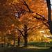 autumn colours Glennville Dairy farm (1)
