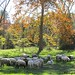 A peaceful scene in the sheep pasture