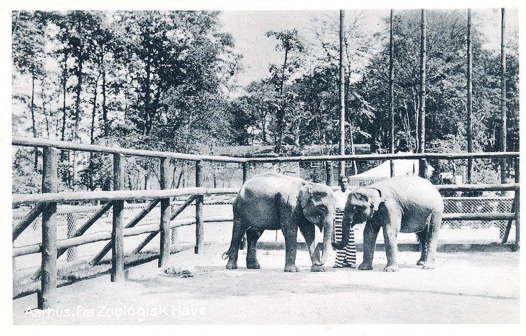 aarhus zoo moden kvinde