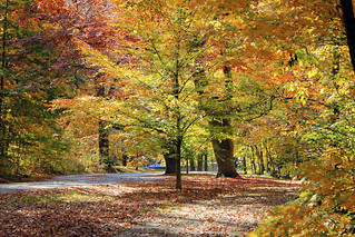 Autumn In Cherokee Park (part 1) | by LuAnn Snawder Photography