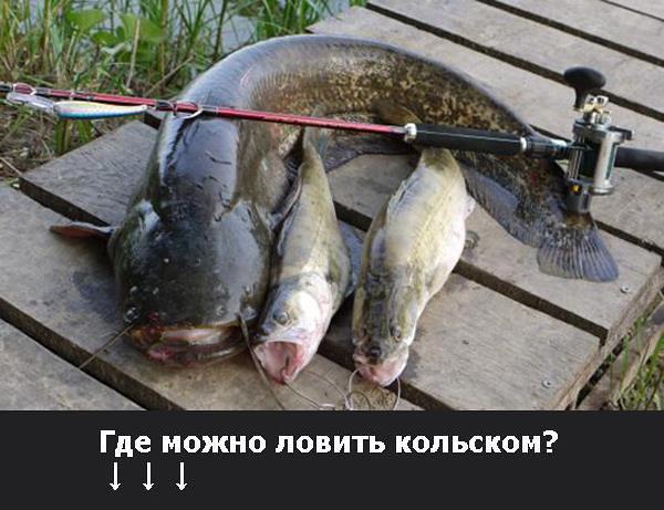 где на кольском можно ловить рыбу бесплатно