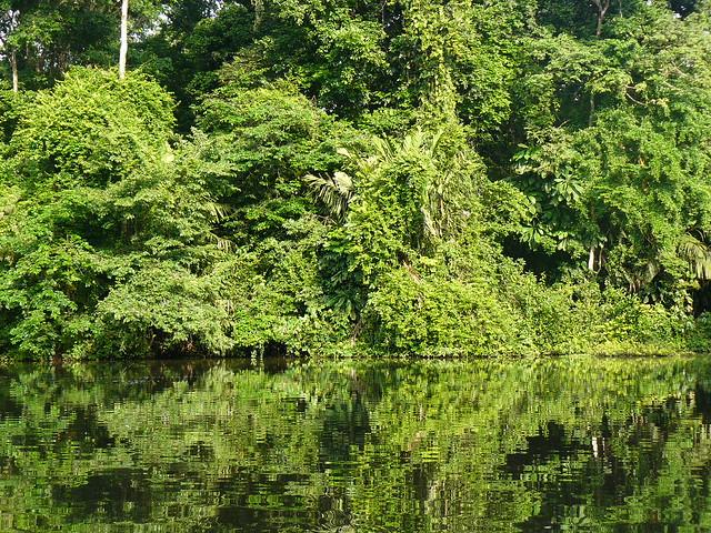 Canal de Tortuguero (Costa Rica)