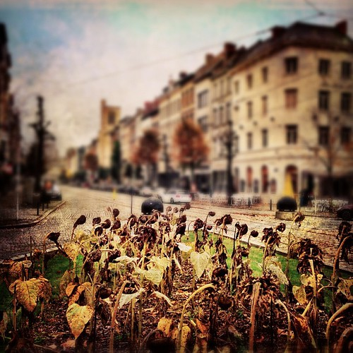 #SunFlowers: Game Over! (#IndianSummer) | by spoedman