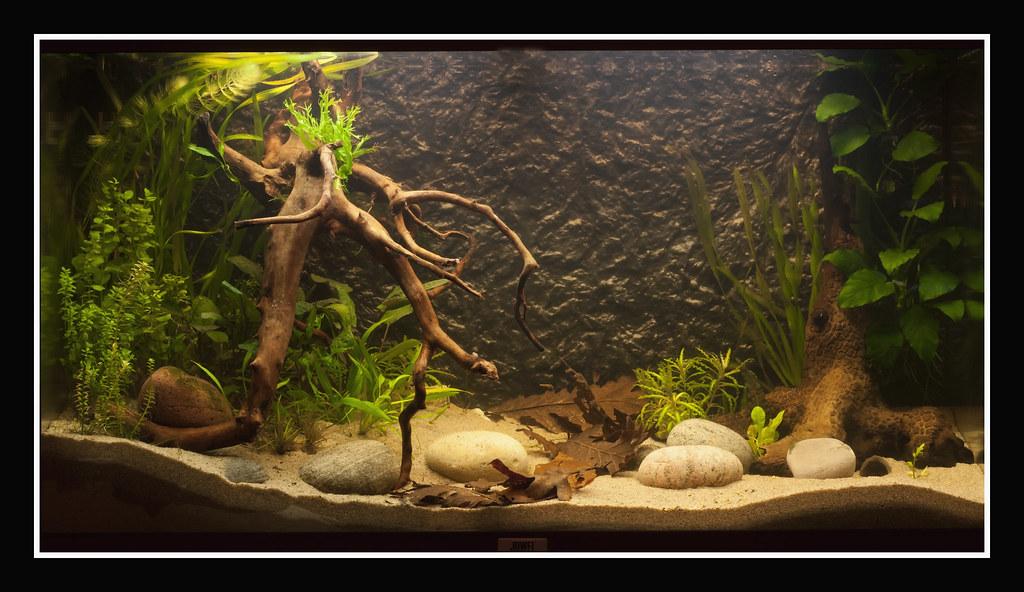 Juwel Rio 125 Biotope Aquarium Jeroen Wijnands Flickr