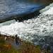 Salmon fishing below Foote Dam