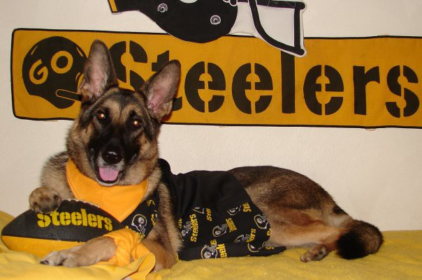 Pittsburgh Steelers Dog | Terms of Use: Please consider ...
