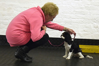October 2012 Puppy Class | by Chadkirk Dog Training Club