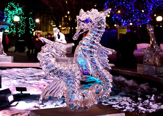 Winterlude Sea Horses in Ice | by Jamie McCaffrey