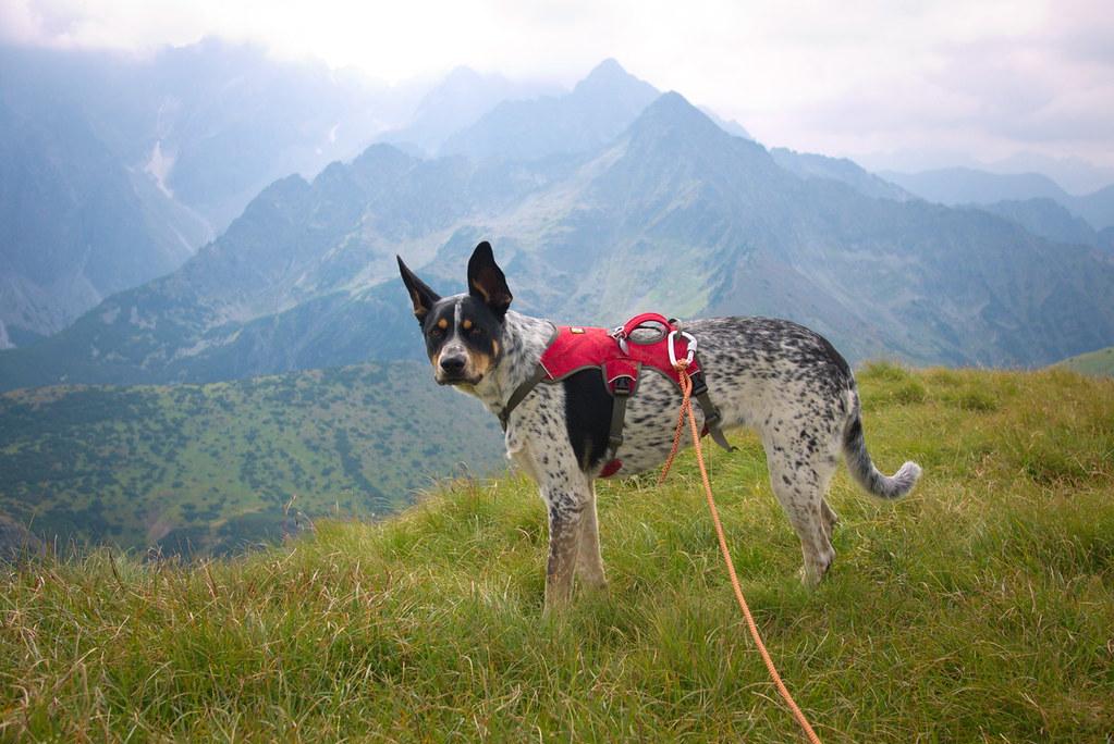 oddanie psa schronisko porzucenie zwierzęcia