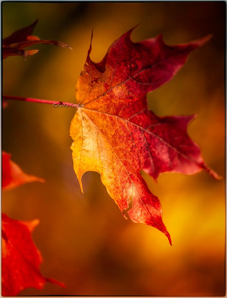 L 39 automne et ses couleurs de feu crifo flickr - L automne et ses couleurs ...