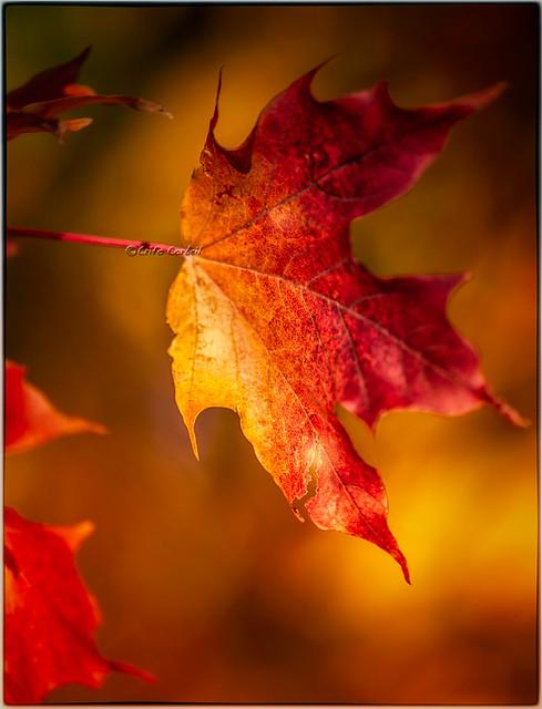 L 39 automne et ses couleurs de feu flickr photo sharing - L automne et ses couleurs ...
