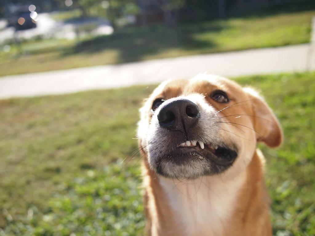 Dog Seems Anxious Walks In Circlesand Pees Inside