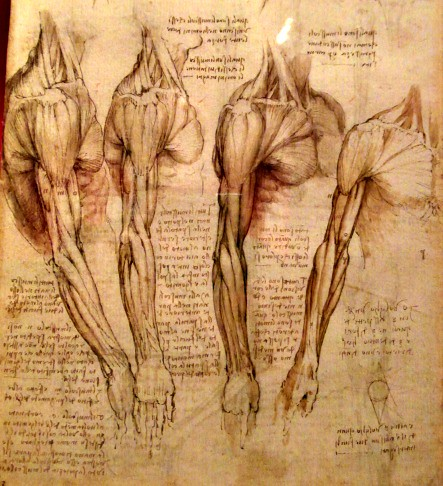 Leonardos Anatomical Drawings 3 Of 4 One Of The Undoubte Flickr