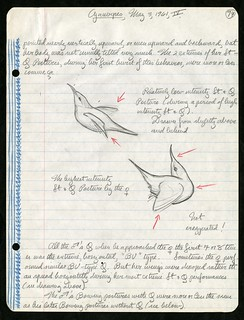 Martin H. Moynihan's field notes on Cyanerpes, Panama, 1961 | by Smithsonian Institution