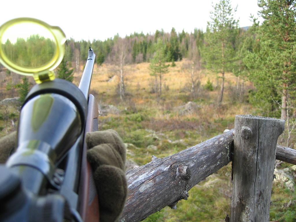 Elgjakt i kommuneskogen - Jakt i Våler