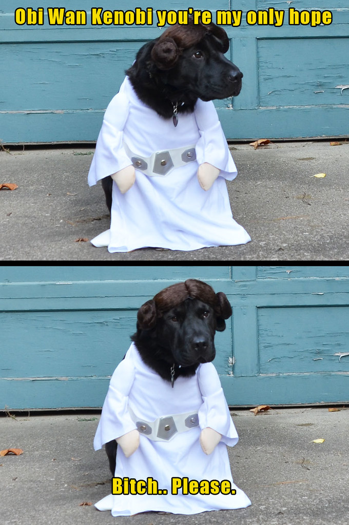 dog halloween star wars costume by smomashup1