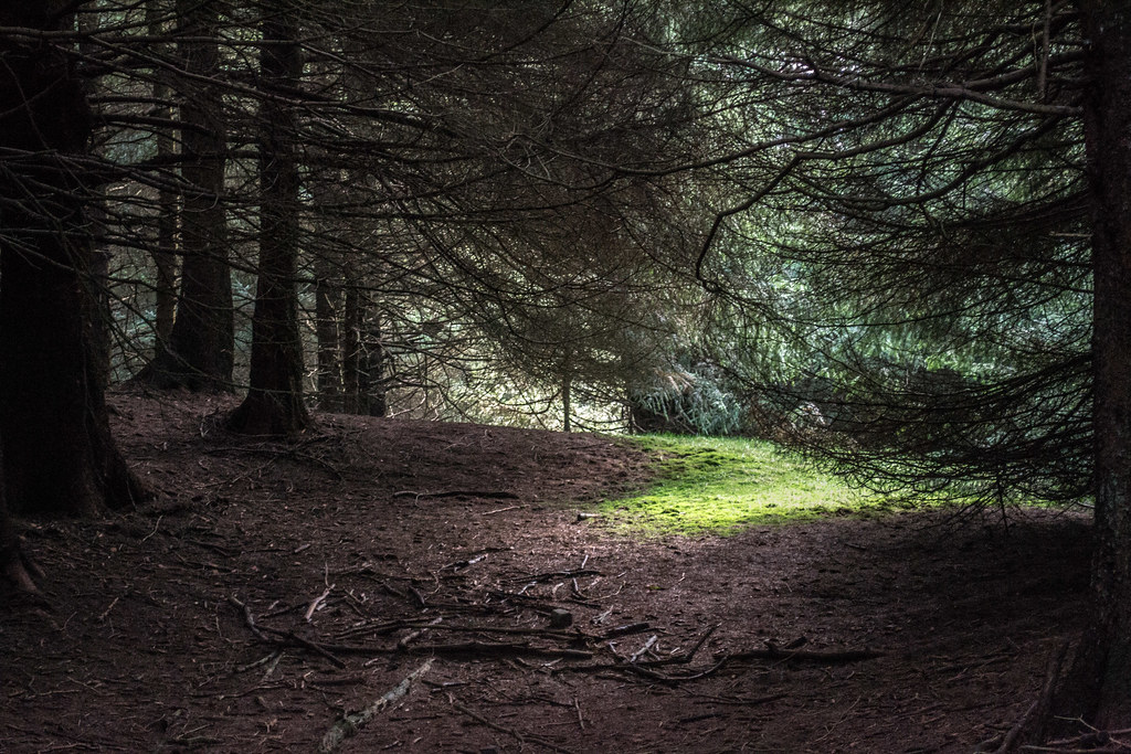 Forest Clearing | Stum...