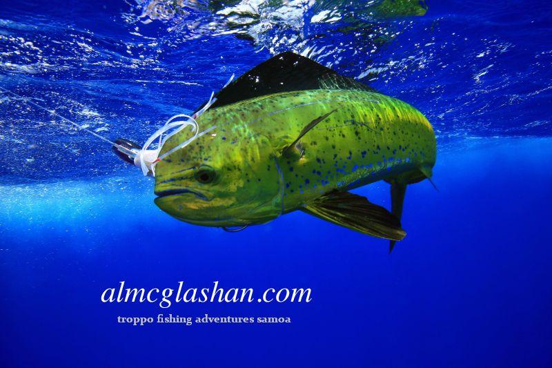 Mahi mahi dorado masi masi dolphin fish flickr for Dolphin fish pictures