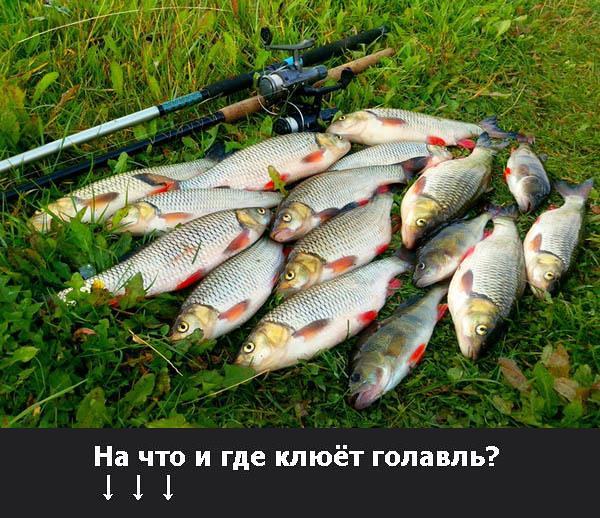 рыбалка на голавля видео ранней весной на что можно ловить