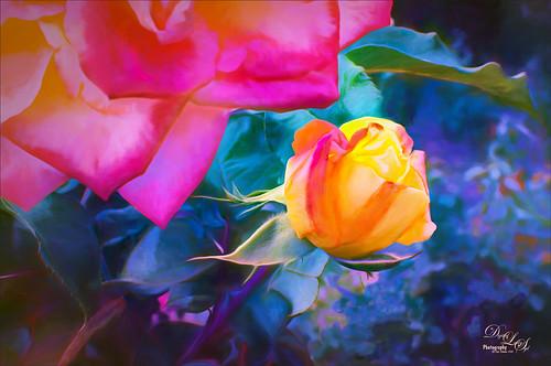 Image of a Yellow Rosebud