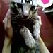 Dion Cat Love
