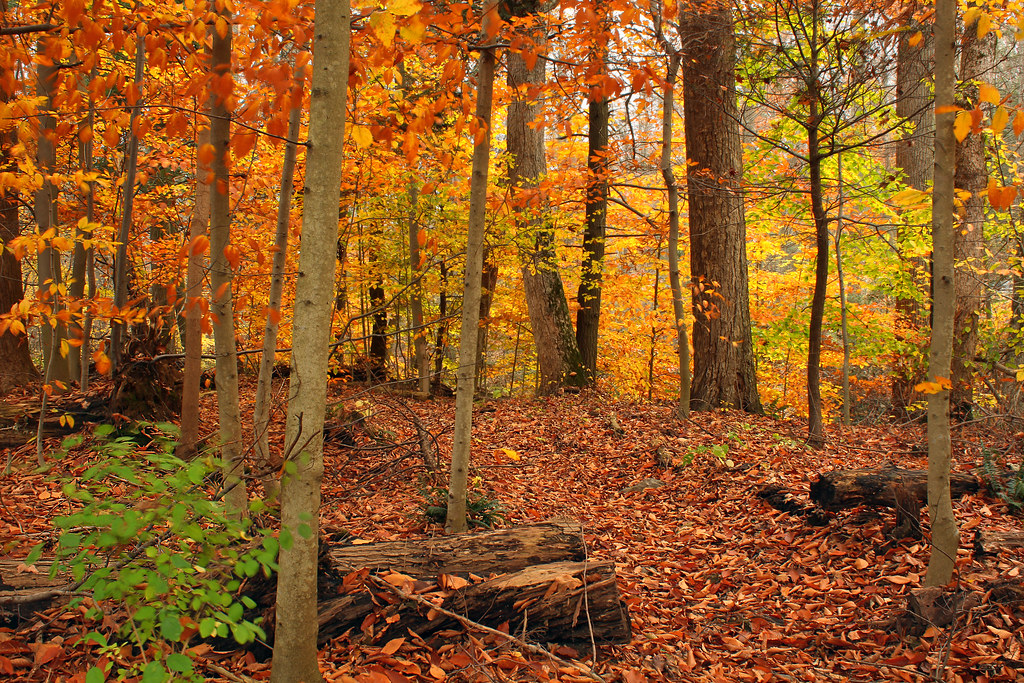 Beartown Woods Natural Area 2 Autumn Foliage And Leaf