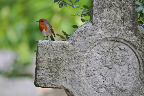 Robin, Brompton Cemetery, London | by Richard Wintle