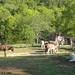 Daisy on donkey guard dog duty (7) - FarmgirlFare.com