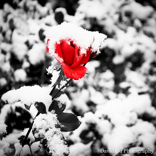 Red in Monochrome at Cobb Dorm | by dainotda