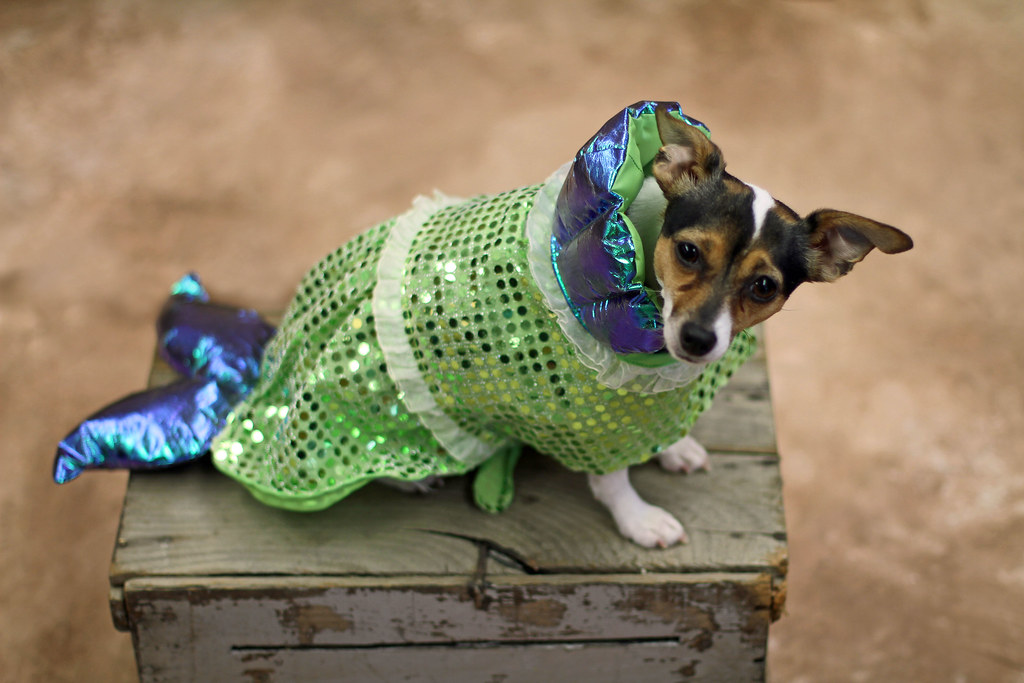 Mermaid Dog