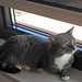 Kiki op apegapen in de vensterbank  / Kiki at last gasp on the windowsill