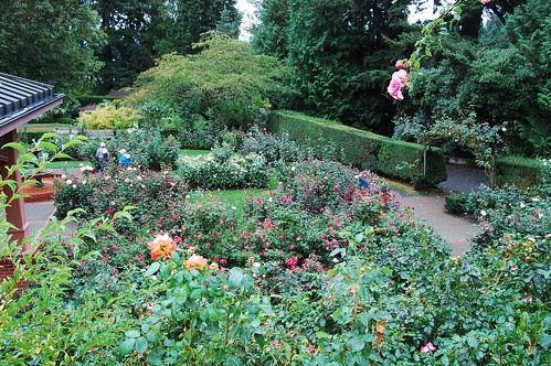 International Rose Test Garden | by David McSpadden