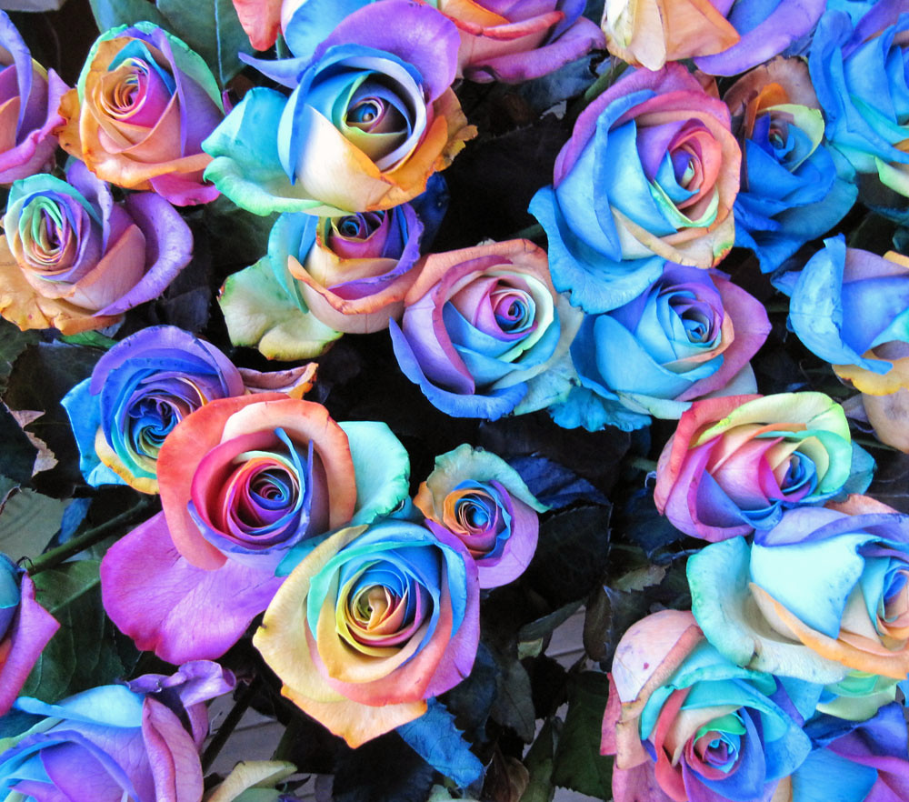 Rainbow roses leanne and david kesler floral design i for How much are rainbow roses