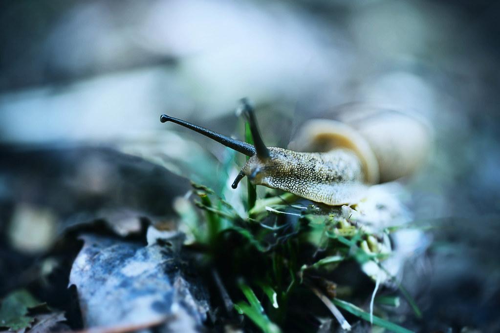 snail go foward