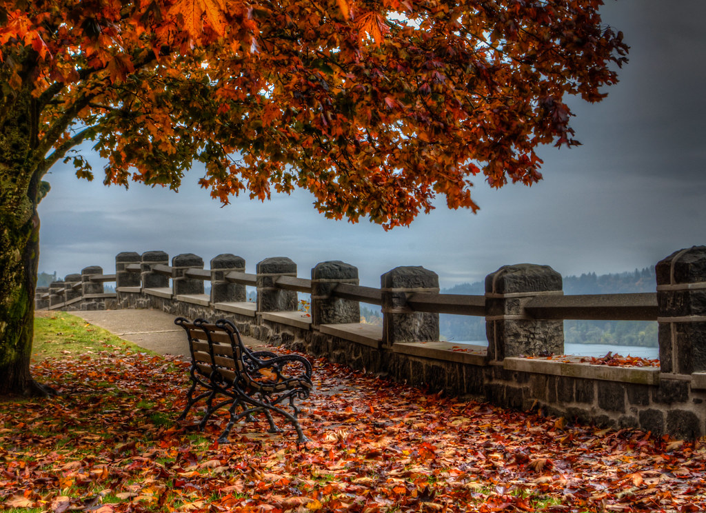 Autumn Bench I Took This Today Near My House It Looks
