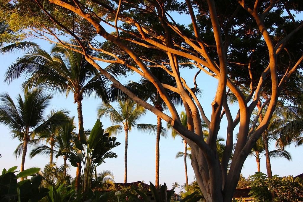 Four Seasons Resort Palm Beach Palm Beach Fl
