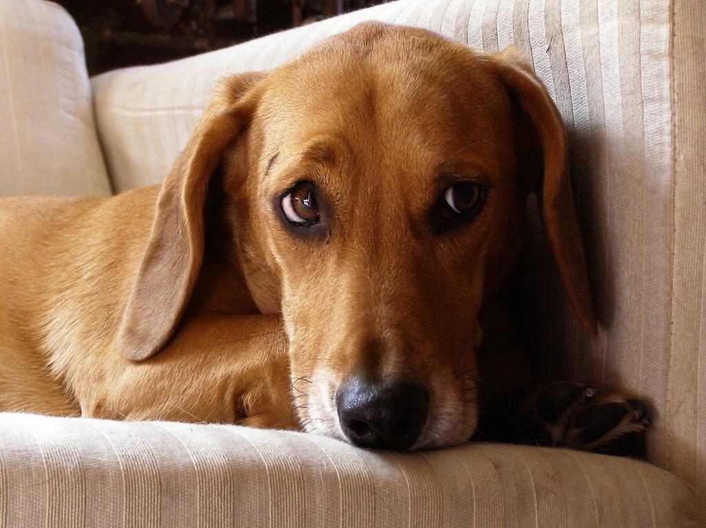 Dog Half Life  Gif