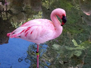Flamingos around Discovery Island | by Erin *~*~*