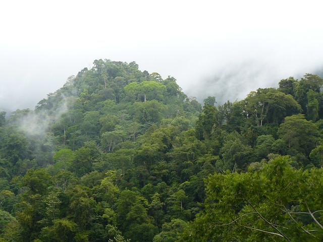 Bosque espeso en Corcovado (Costa Rica)
