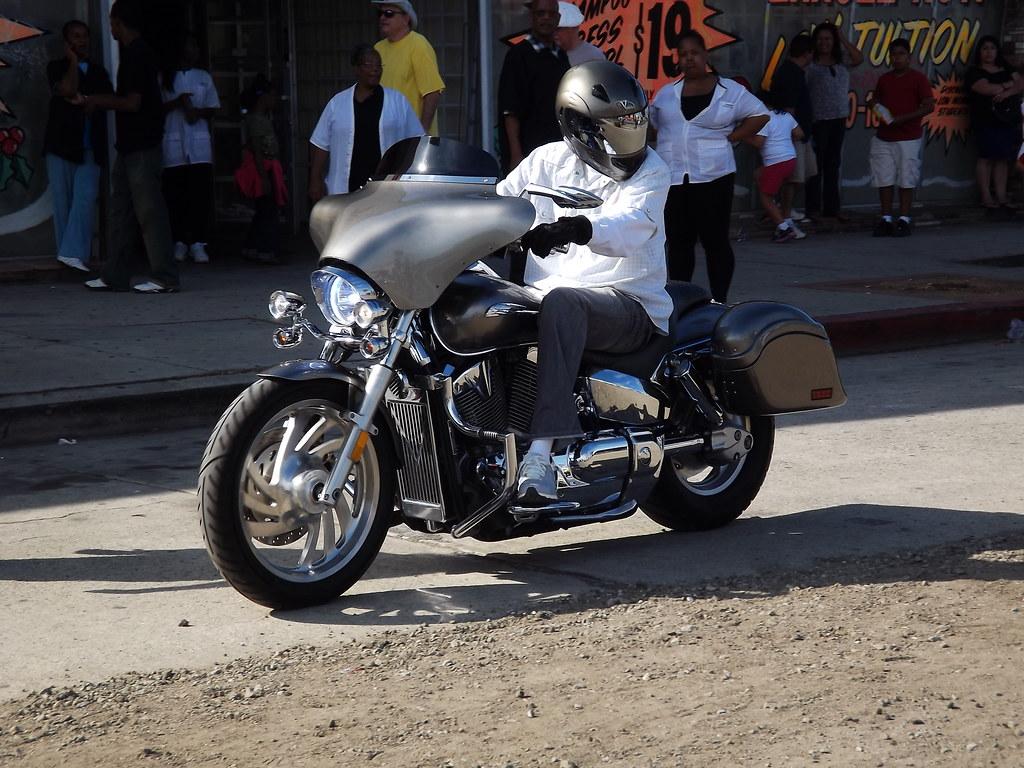 Image Result For Harleys Dog