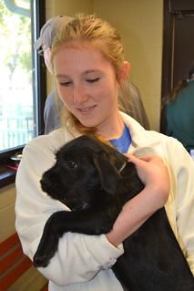 Kentucky Humane Society Dog Cat Adoption Centers