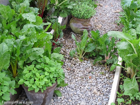 Go Green To Save Money - Growing Your Own Fresh Herbs (1) | by Farmgirl Susan