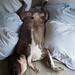 Essa cama é Minha | This bed is mine now