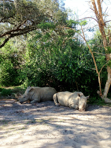 Rhinos at rest | by Big DumpTruck