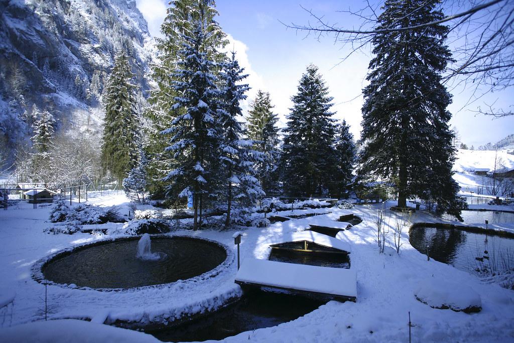 bio forellenzucht im winter blausee flickr. Black Bedroom Furniture Sets. Home Design Ideas