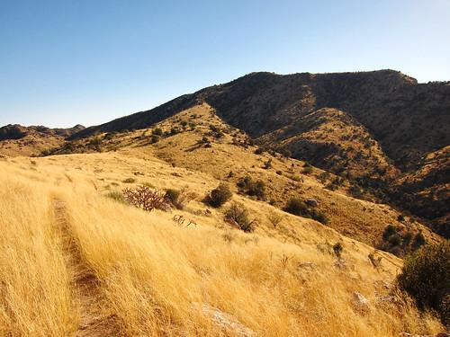Agua Caliente Hill - November 2012
