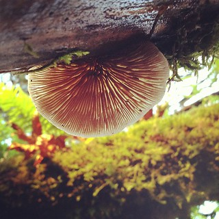Mushroom from below | by amckimmey
