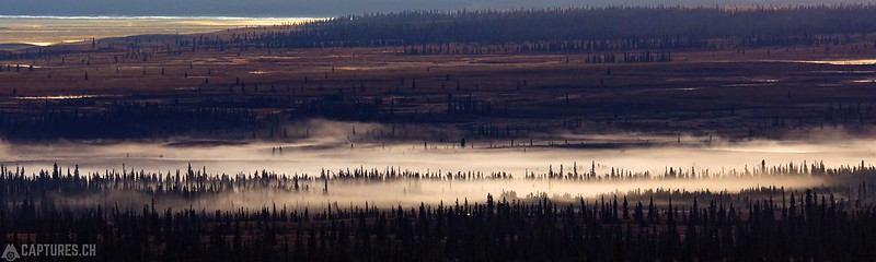 Morning fog - Denali Highway