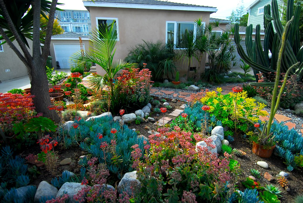 Our front yard our drought tolerant front yard low for Low maintenance drought tolerant plants