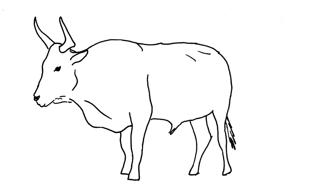 Line Drawing Of A Bull Used As Illustration Card For